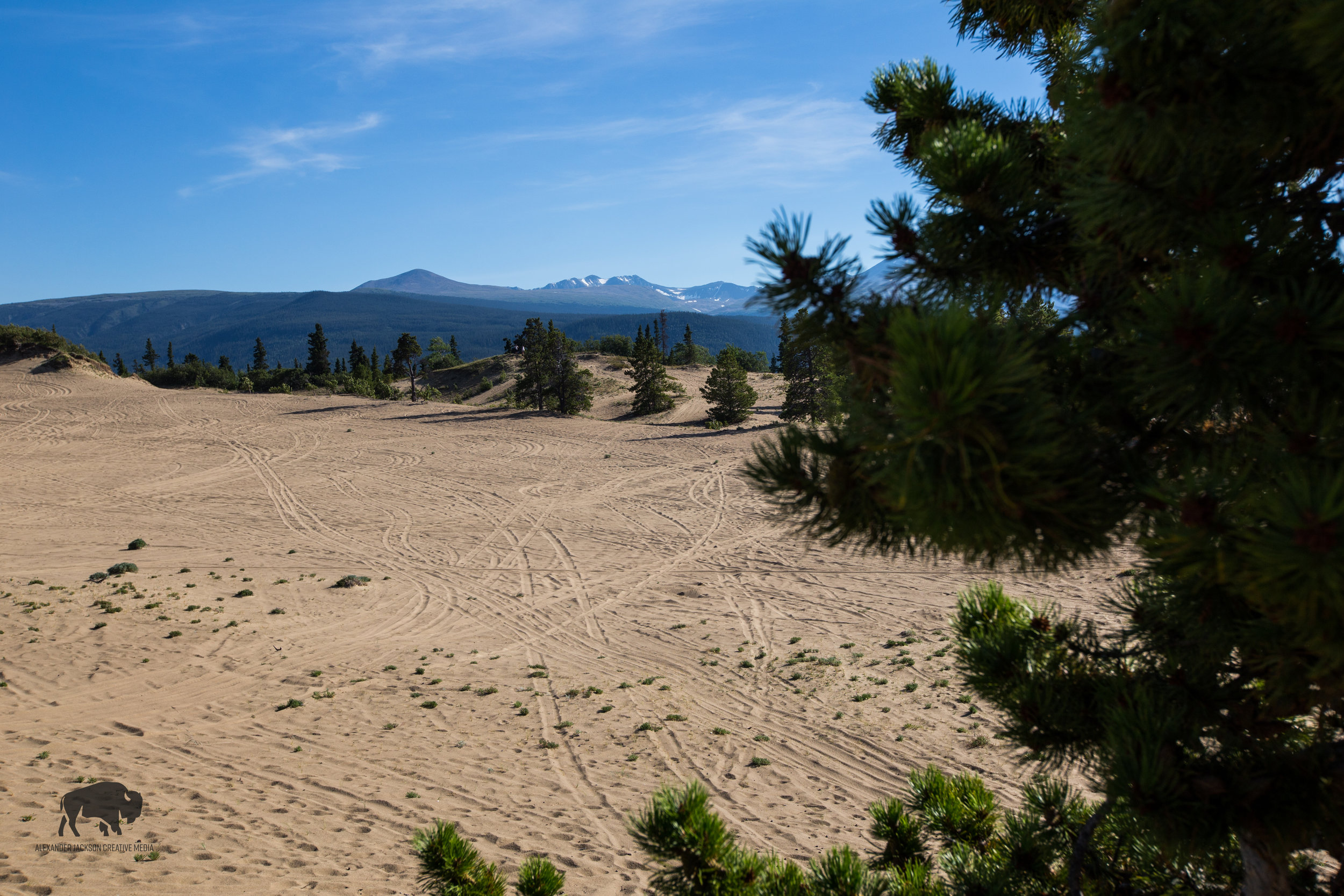 The Carcross Desert. All this sand was blown here by the high winds coming off the lake.