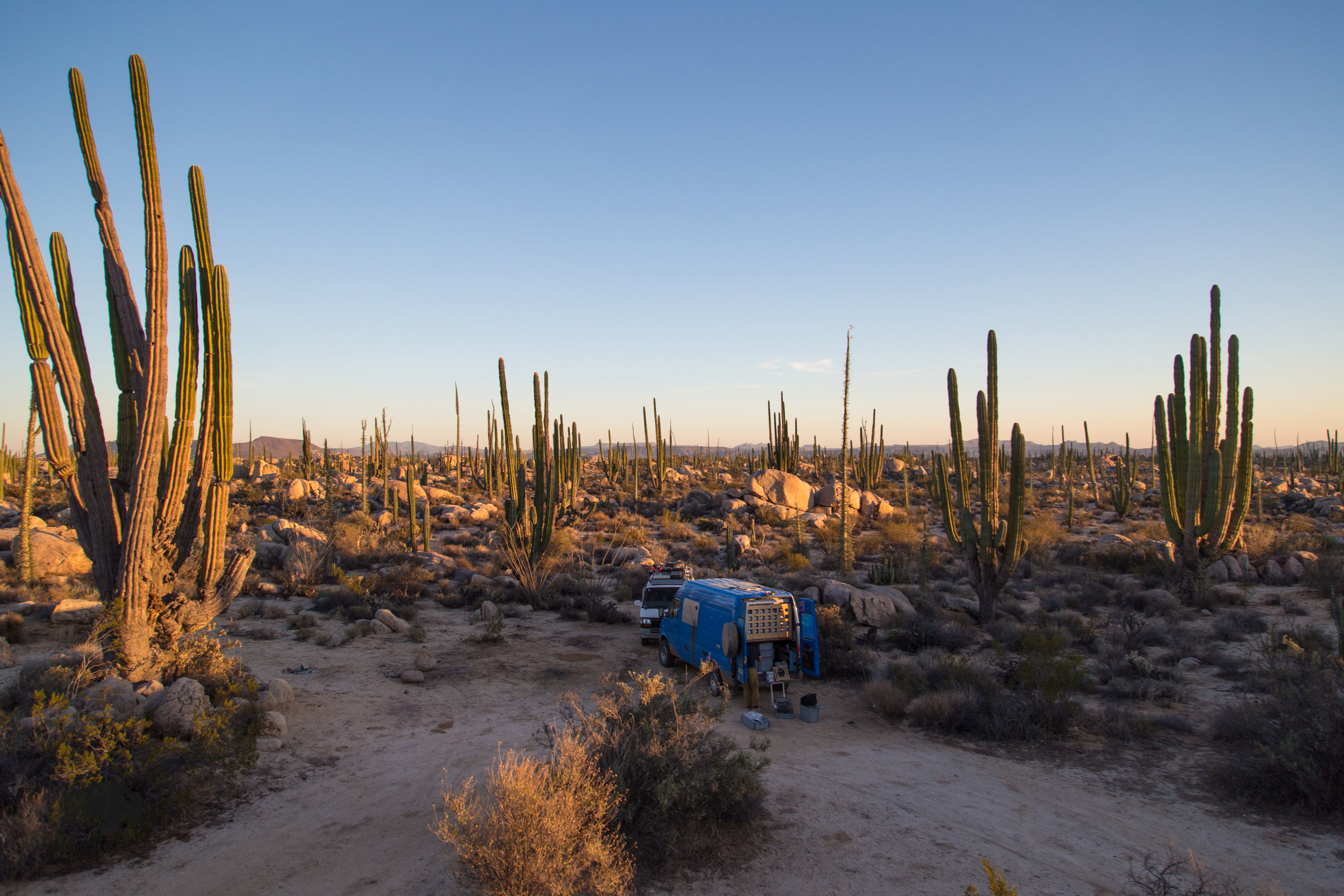 A cactus forest in Baja, Mexico where I ran out of fuel and had to syphon from Andres' Sprinter van.