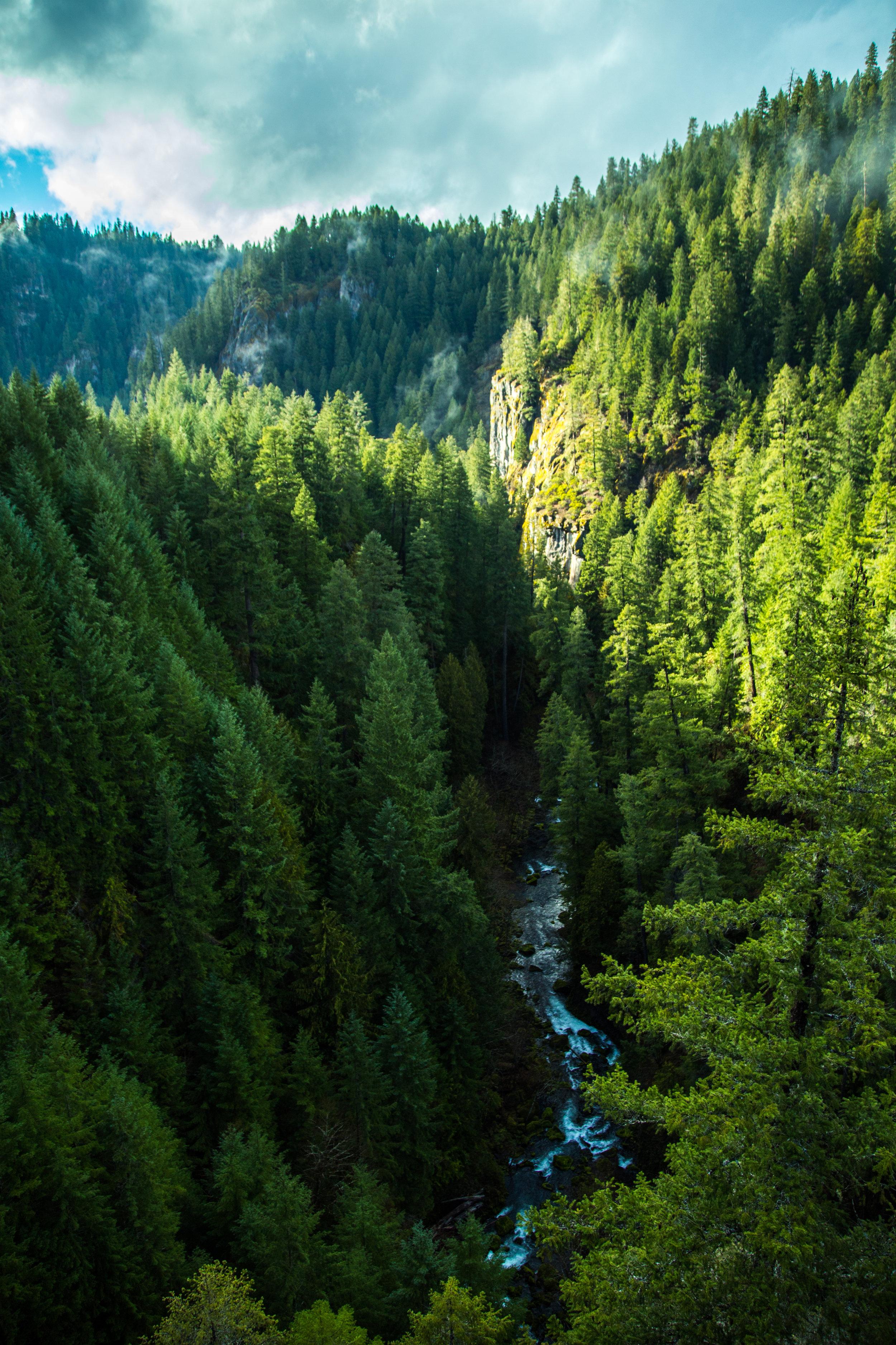 Umpqua National Forest, Oregon.