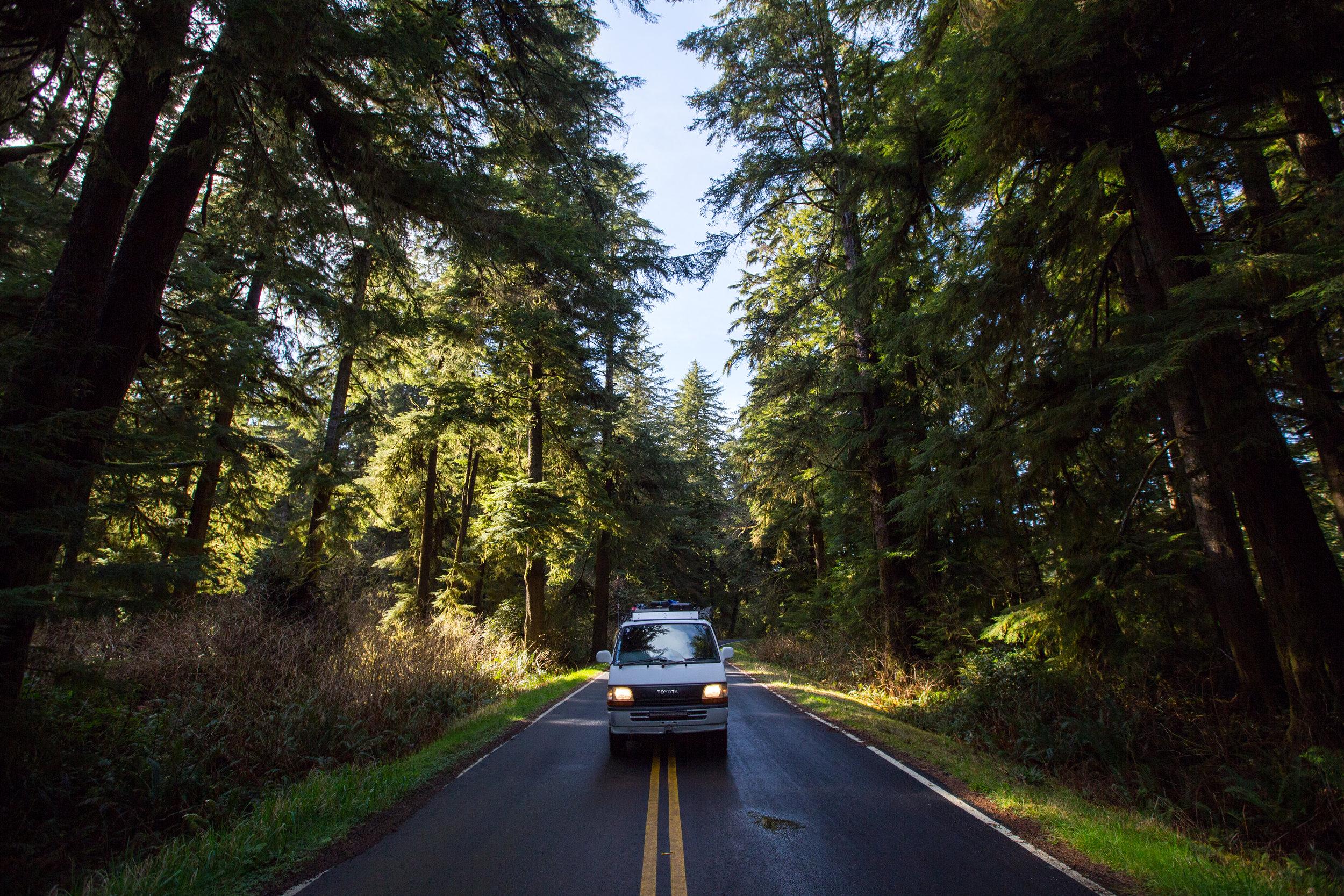 Olympic National Forest, Washington.