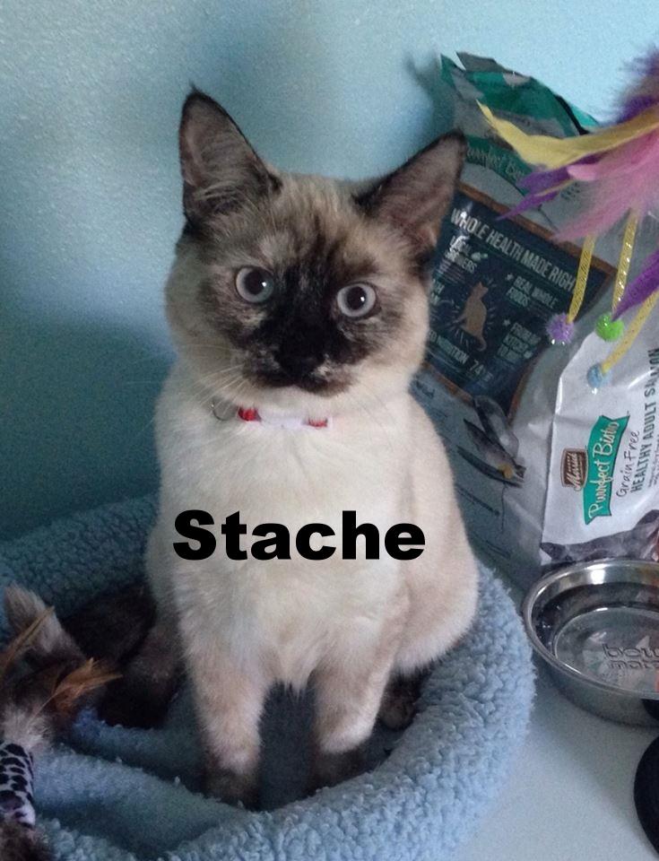 Stache.jpg