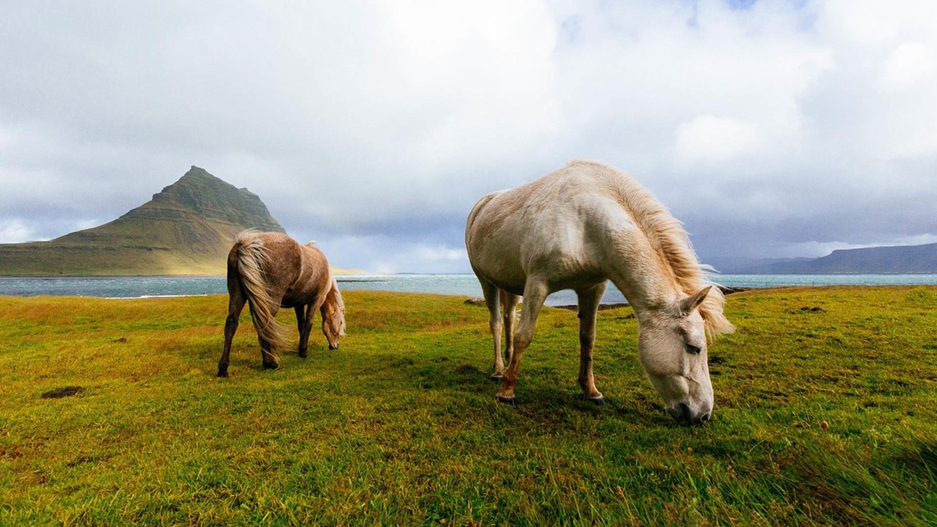 horses-1149185_1280_Edited.jpg