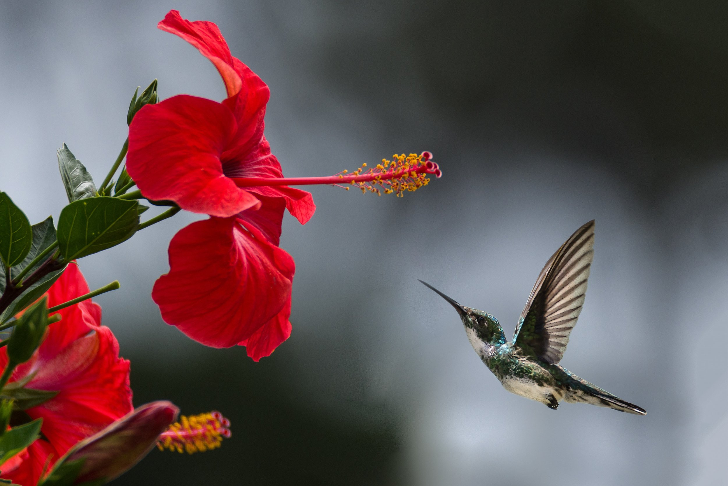 beautiful-beautiful-flowers-bird-1133957.jpg