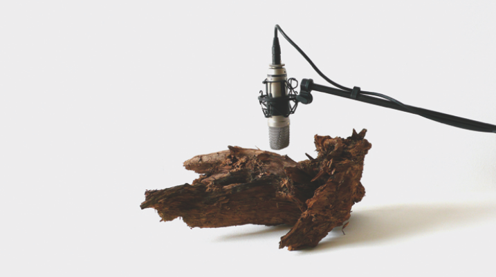 """""""25 woodworms, wood, microphone, sound system"""" by Zimoun"""