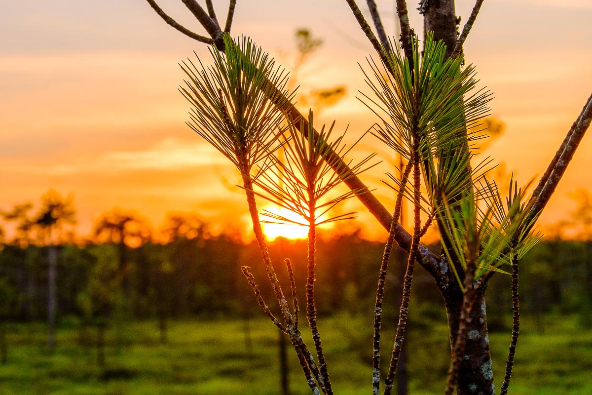 Saco Heath Sunset