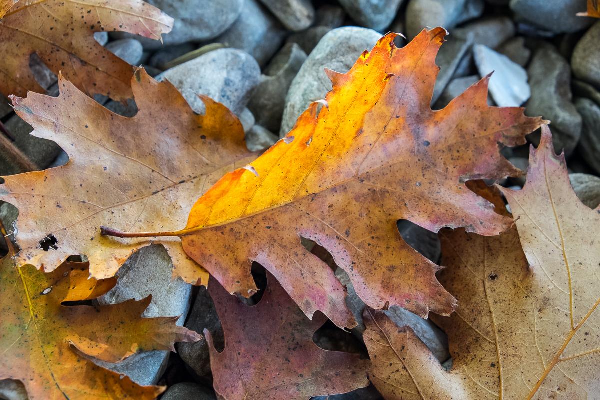 Luminous Leaf