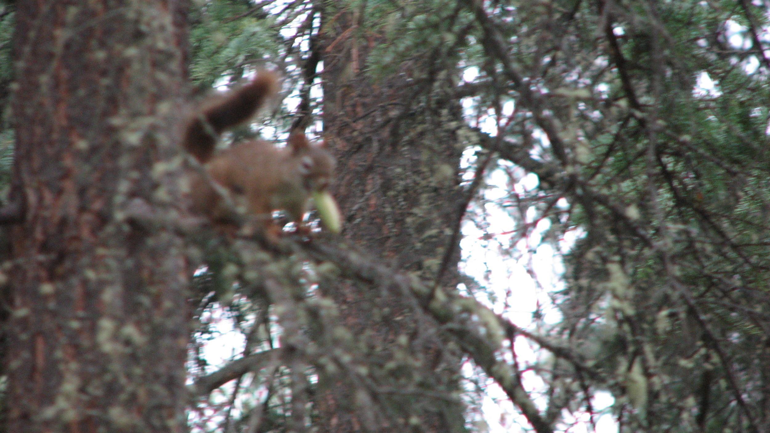 Autofocus: 0, Squirrel: 1