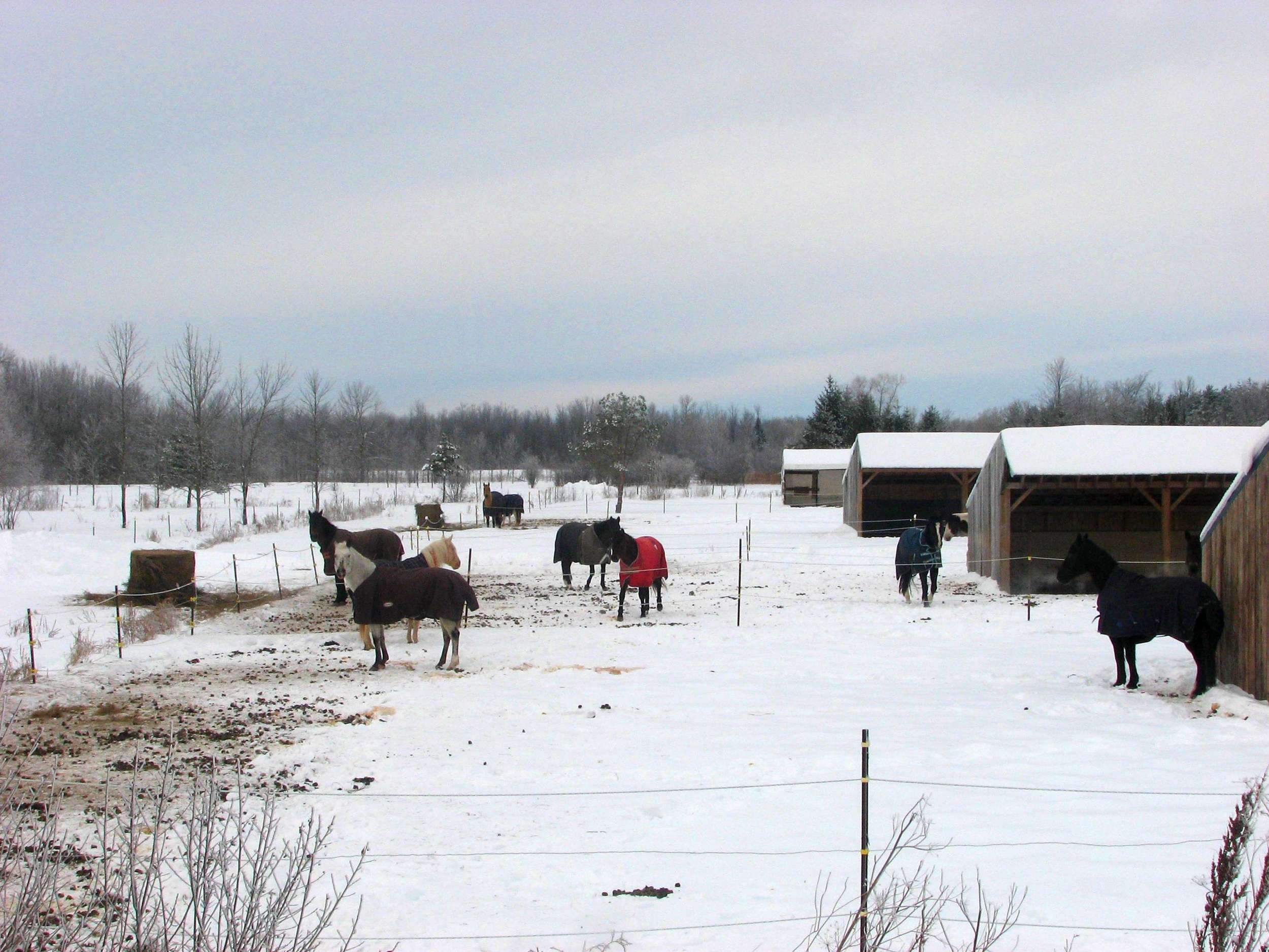 Even at 1000, pictures can use some more words. Just before I took this photo the horse on the right (blue warmer) was approaching the one wearing red warmer. The one with the red bit the blue one, who then ran away. Then they were back to observing the crazy winter cyclist by the road.