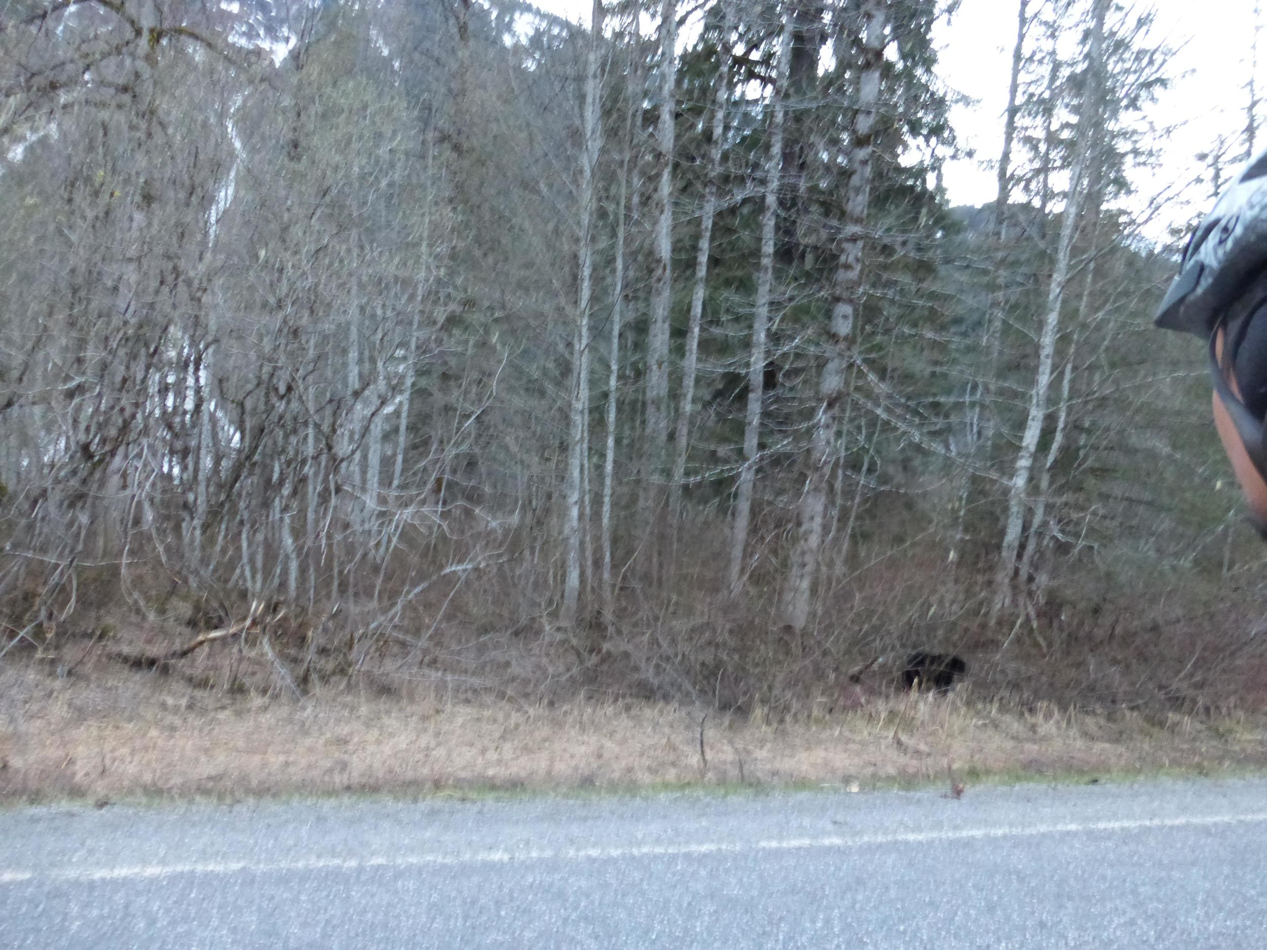 That's #3, he/she was chilling in the bush, I thought I passed it when I turned around and it was right there.