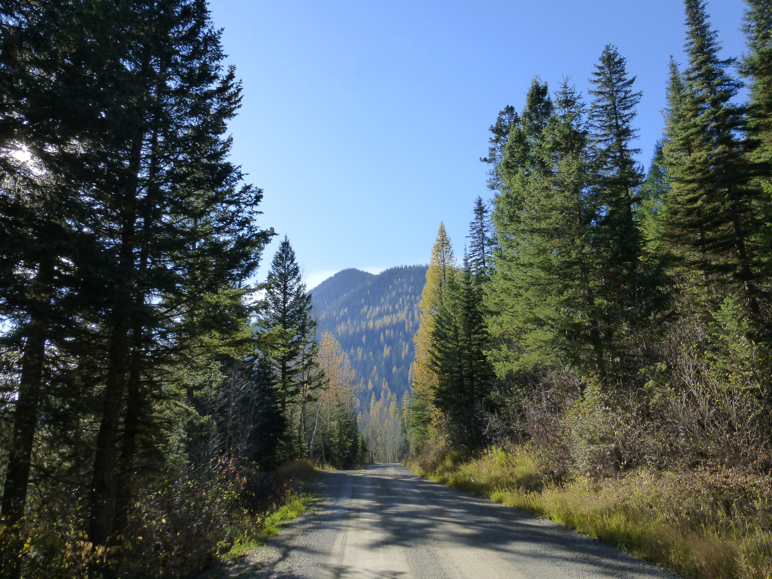 The road took me through some amazing scenery, my favorites: the Douglas Fir trees which shed their needles for the winter.