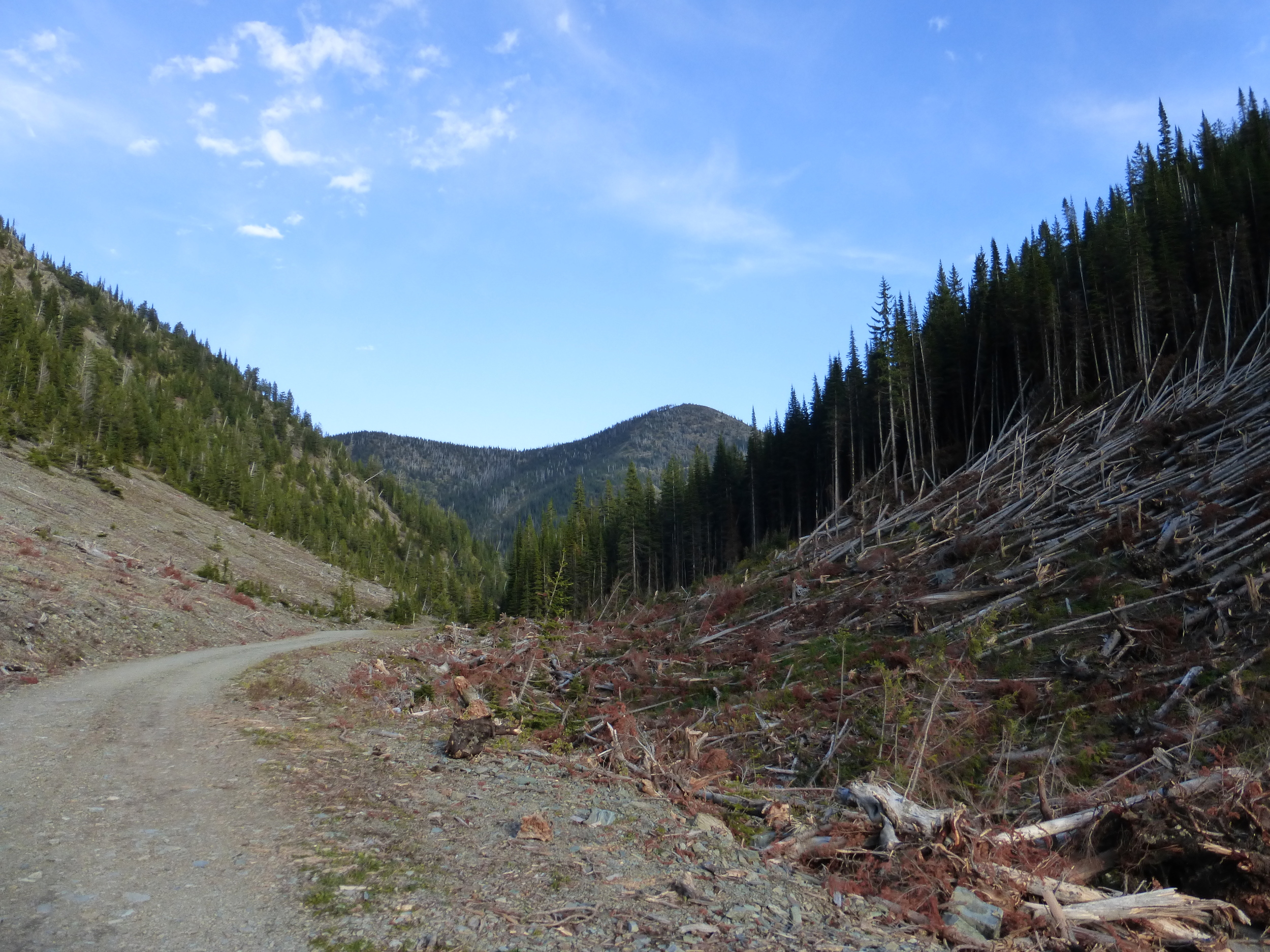 An avalanche had swept through this pass.