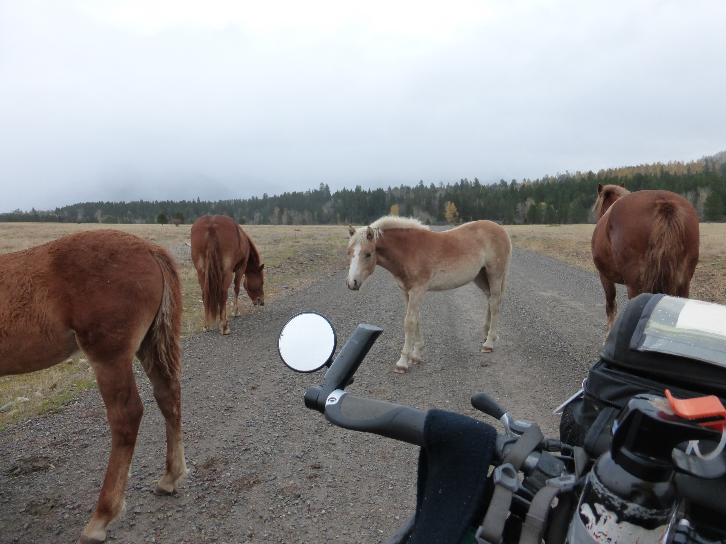 Normal   0           false   false   false     EN-US   X-NONE   X-NONE                                                                                Horses are curious animals, they would never miss an opportunity to check out a passer by. Those guys surrounded me in no time and began trying to chew on my gear! My green jacket, my panniers and one tried to take a bite out of my mirror.
