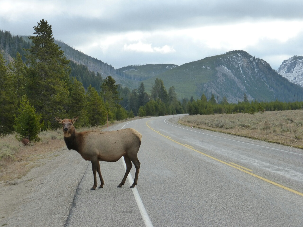 As I entered Wyoming, some of the wildlife came out to greet me on the road.