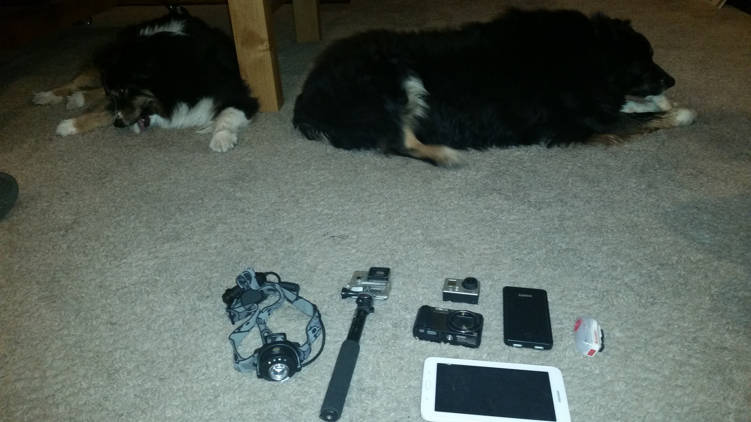 The electronics kit. Sorry no review for the dogs. Wait... they are cute! WOULD RECOMMEND!