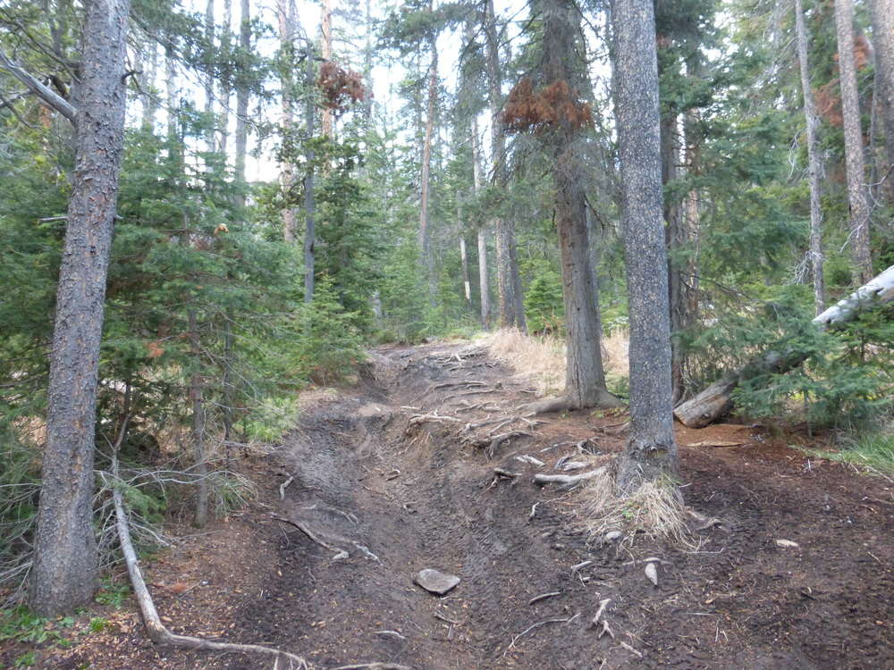 Some of the rougher sections of the Great Divide Mountain Bike Route in Montana.