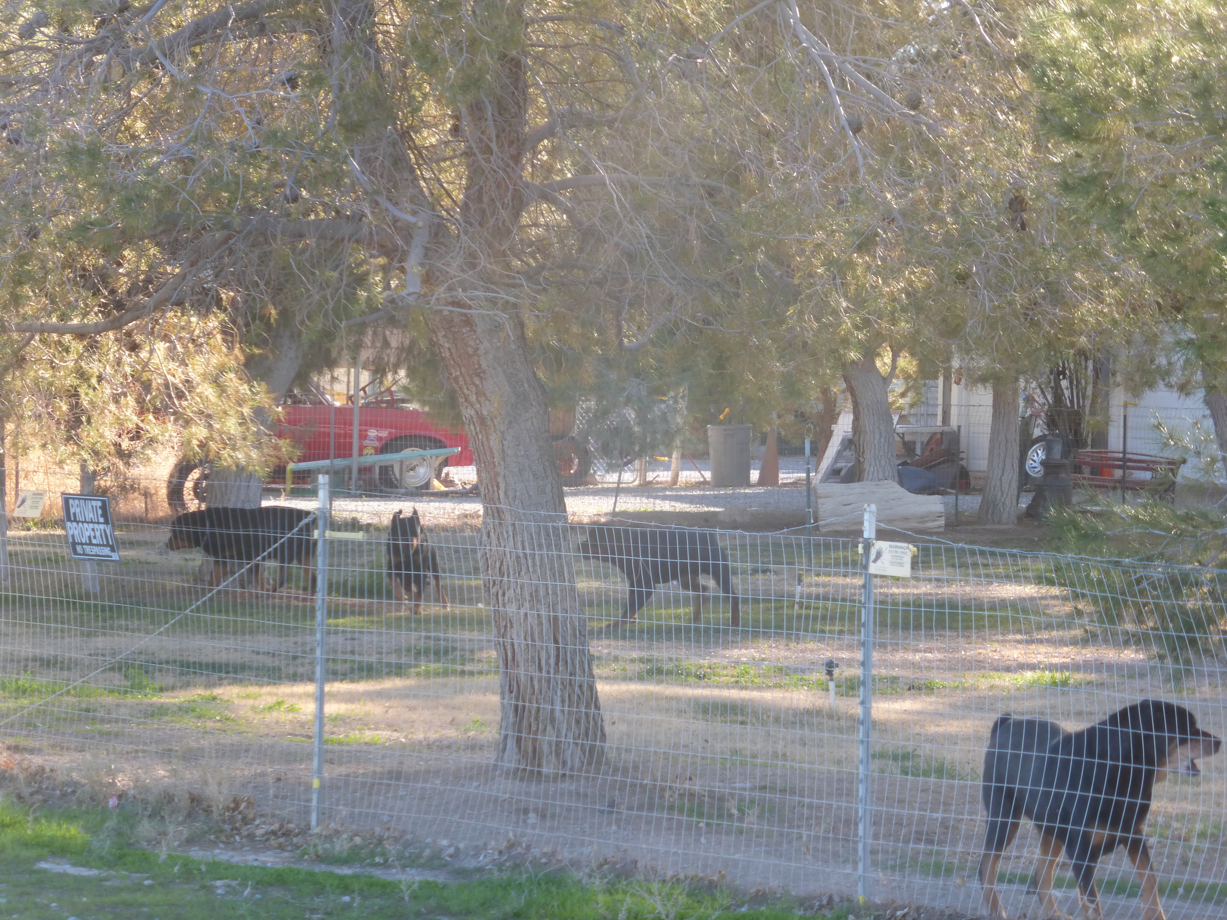 "Meanwhile in Pahrump: if one Rotweiler is not enough - get four! (small sign reads: ""electric fence"")"
