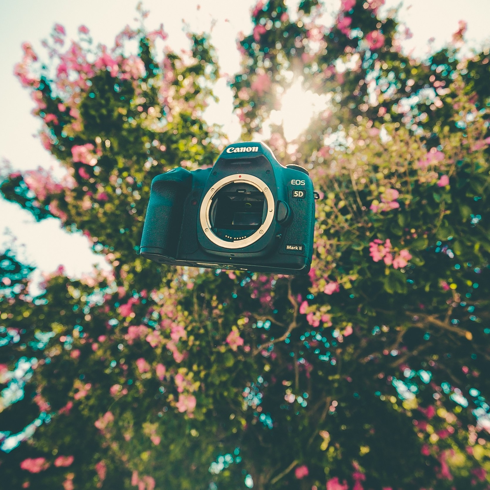 Free Photography Course