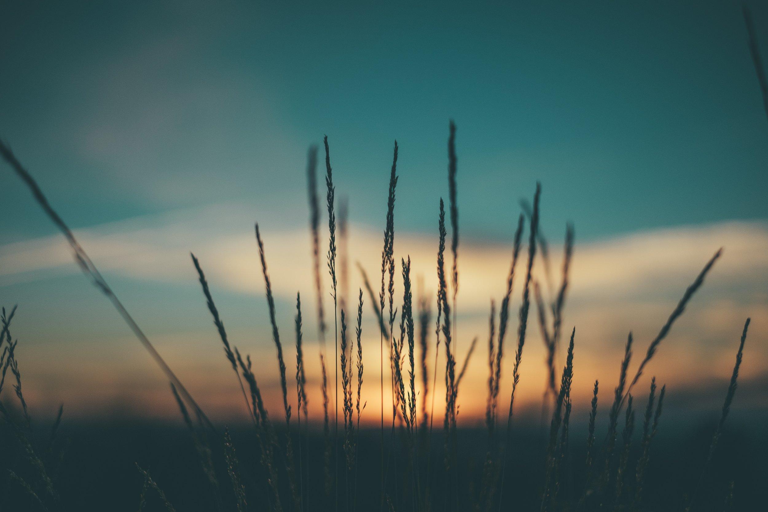 sunsetwheat.jpg
