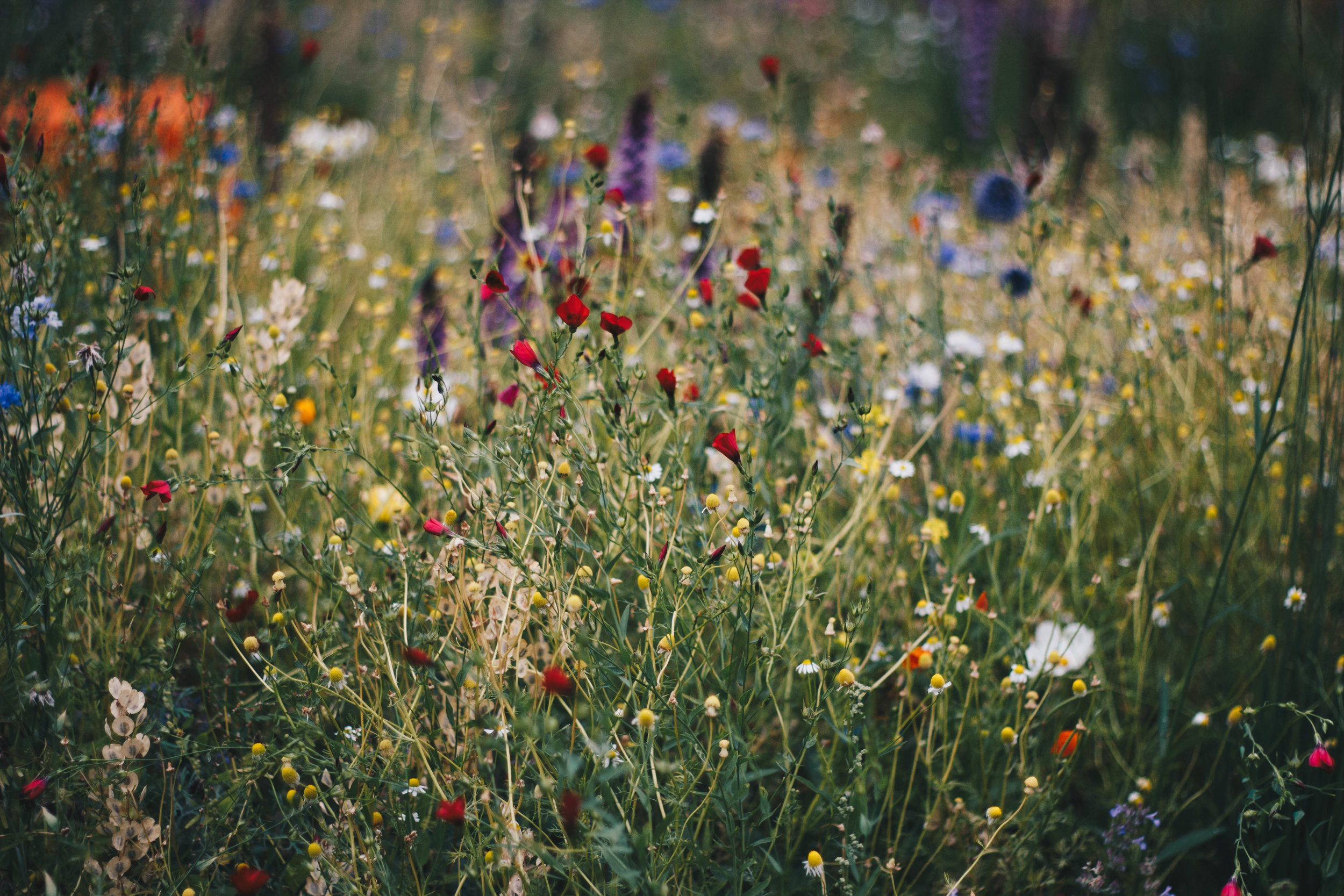 Growing Flowers-Option 2.jpeg