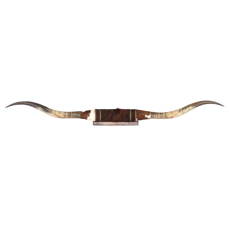 longhorns.png