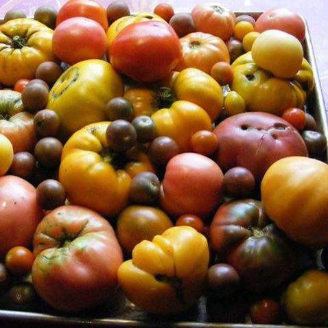 Heirloom tomatoes in August.