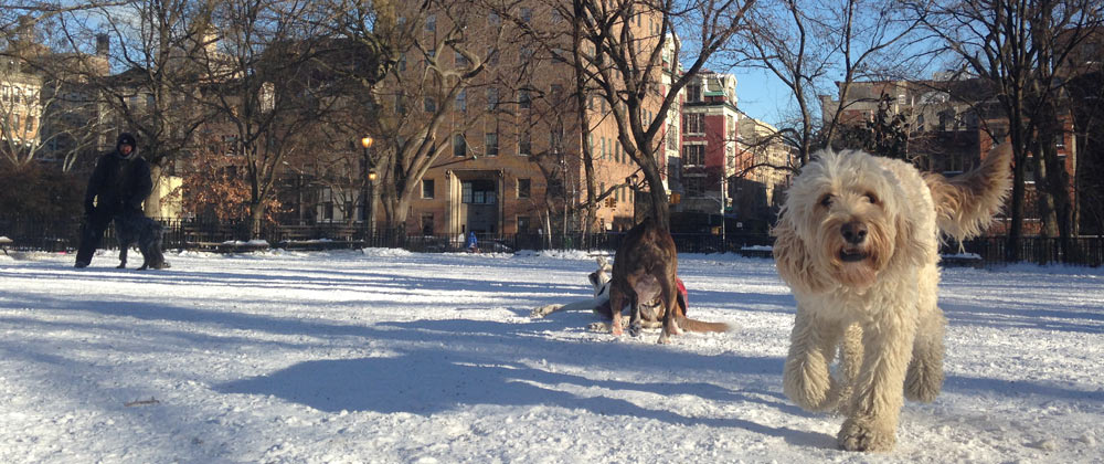 Tompkins Square dog run in the winter with Avenue B in background
