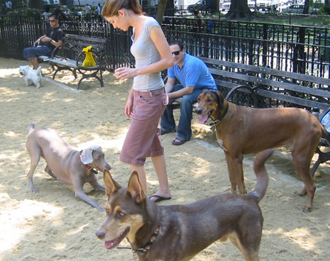The dog park is open from 6 a.m. - midnight, 365 days a year. We're located in Tompkins Square Park - NYC, along the 9th street path between Avenue A & B.