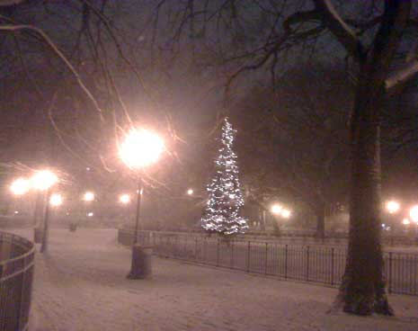 The Christmas Tree in Tompkins Square