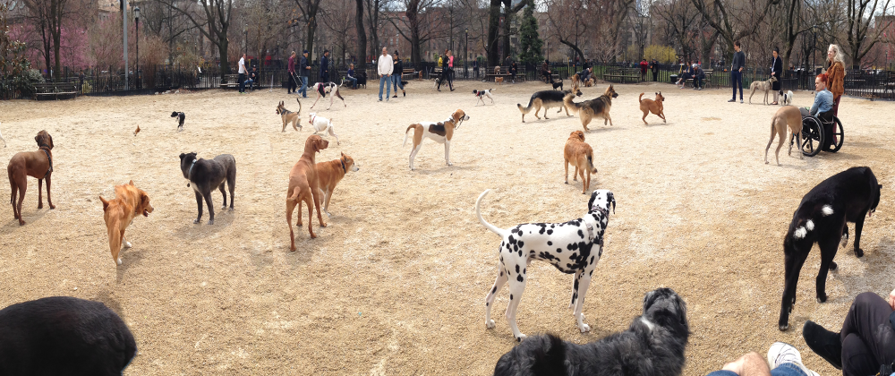 The Large Dog Run in Tompkins Square Park