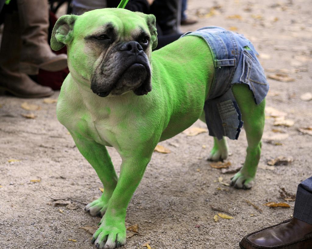 Halloween Dog Parade 2020 Halloween Parade — Tompkins Square Dog Run