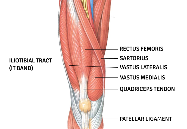 quadriceps-muscles-640x440.png