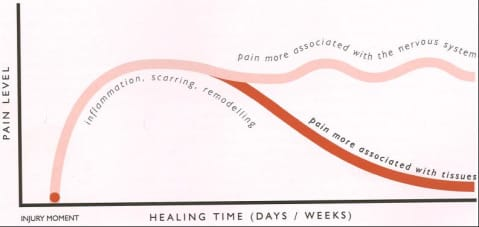 Maybe the  most important  picture to understand if you've had pain lasting more than six months.  Pain that lasts more than six months is generally related to an  overly sensitive nervous system  rather than a specific issue in the tissues  (Picture credit: Explain Pain - Butler & Mosely)
