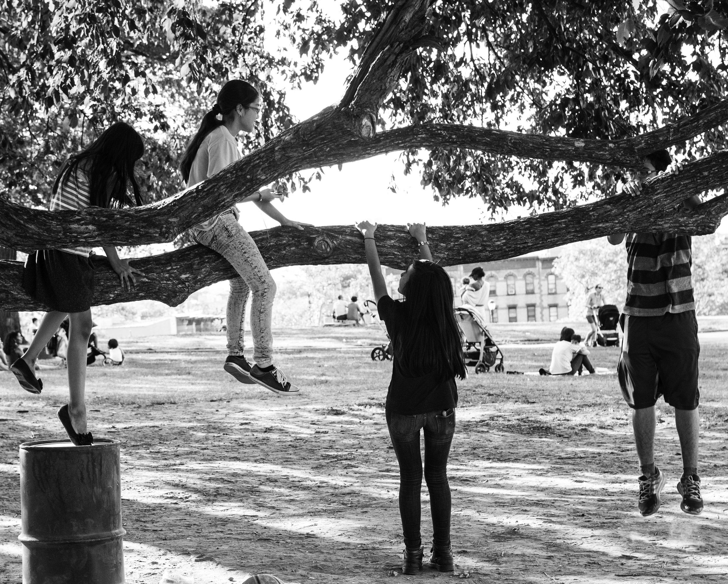 Tree dwellers.jpg