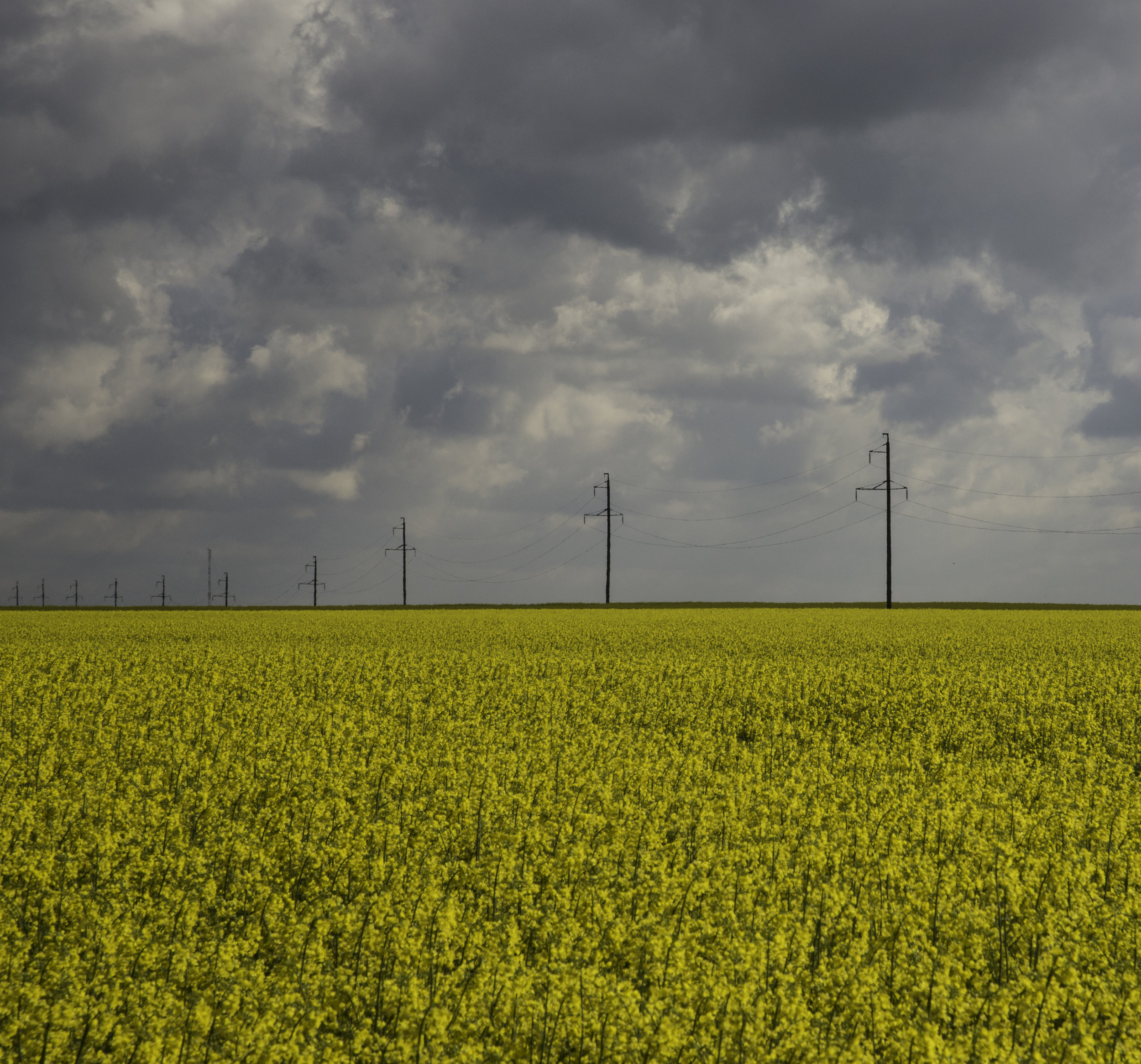 1 Yellow field.jpg