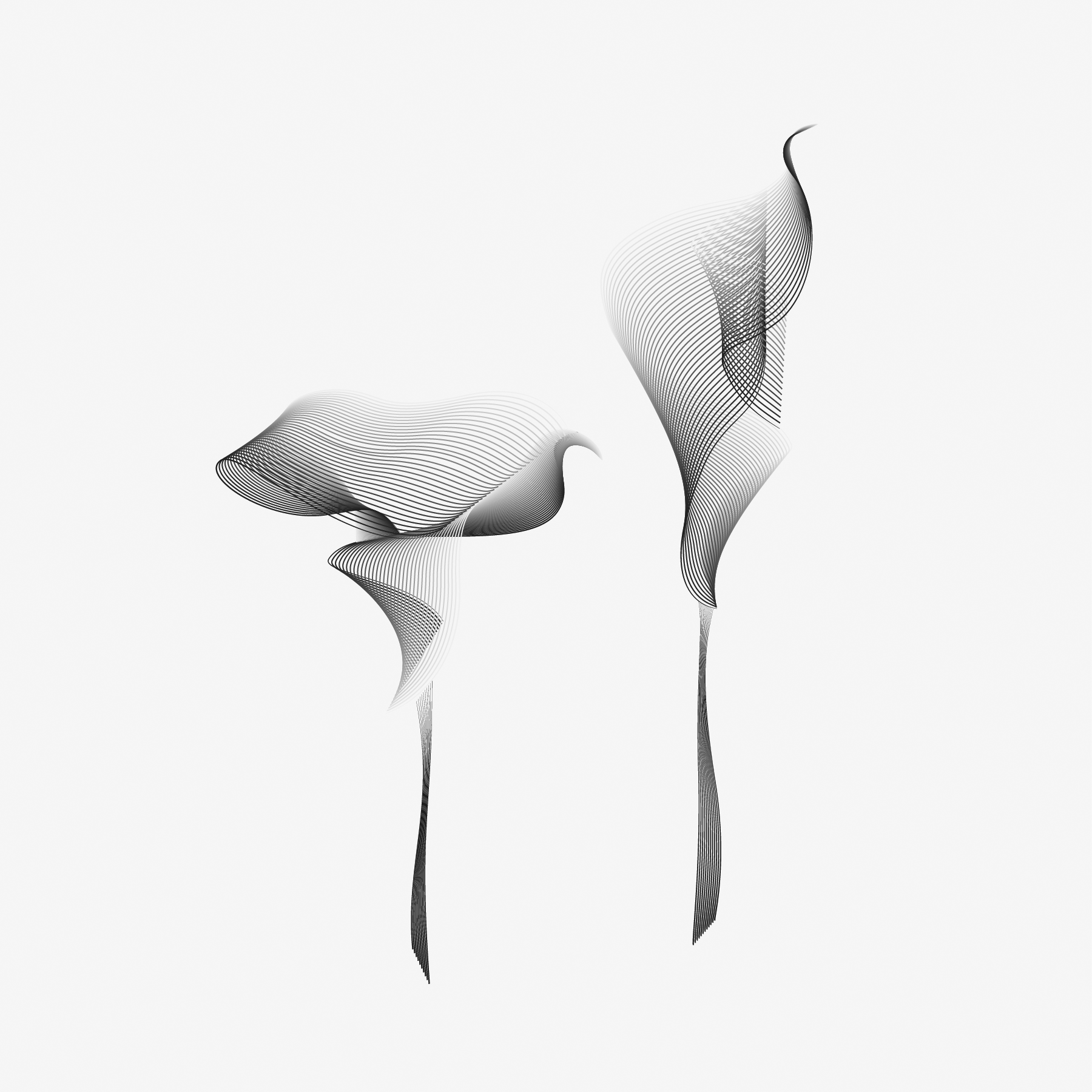 flora-bw.png