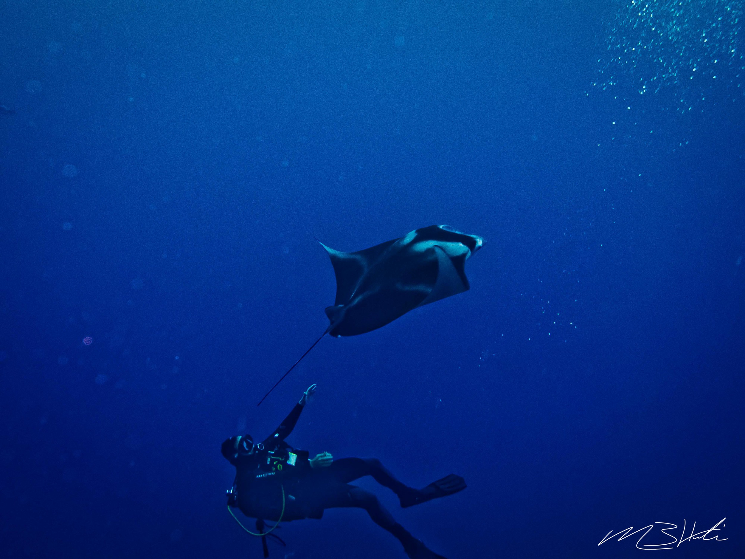 Diving with Manta Ray in Kona, Hawaii