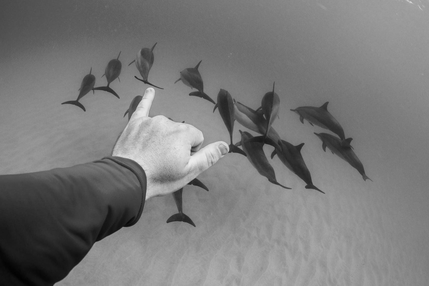 Photographing Hawaiian Spinner Dolphins ( Oahu, Hawaii )
