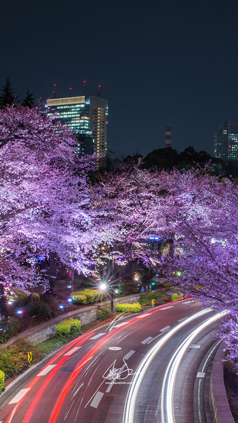 Cars zoom under the cherry blossoms at Tokyo Midtown   DOWNLOAD
