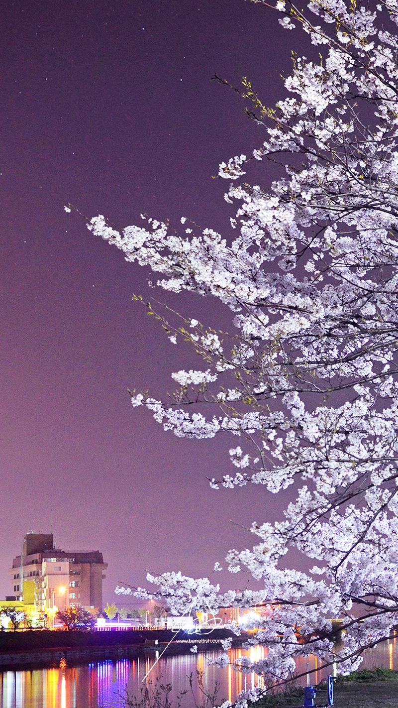 Lights reflect over the cherry blossom-lined Imagawa river in Yukuhashi, Fukuoka   DOWNLOAD
