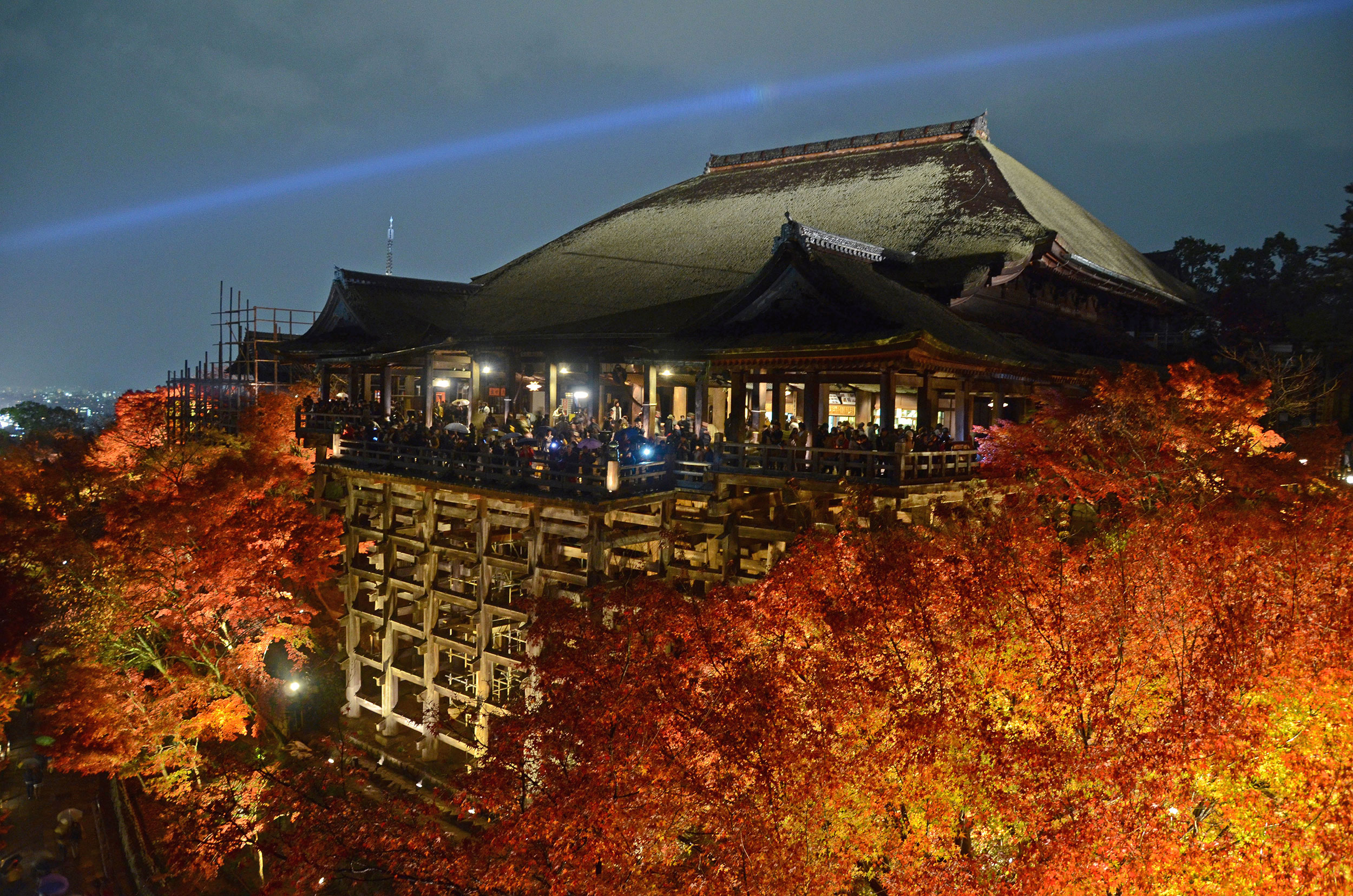 Kiyomizudera's fall leaves illuminated at night - [  BUY PRINT   - Enter KYOTOFALL for 10% off]