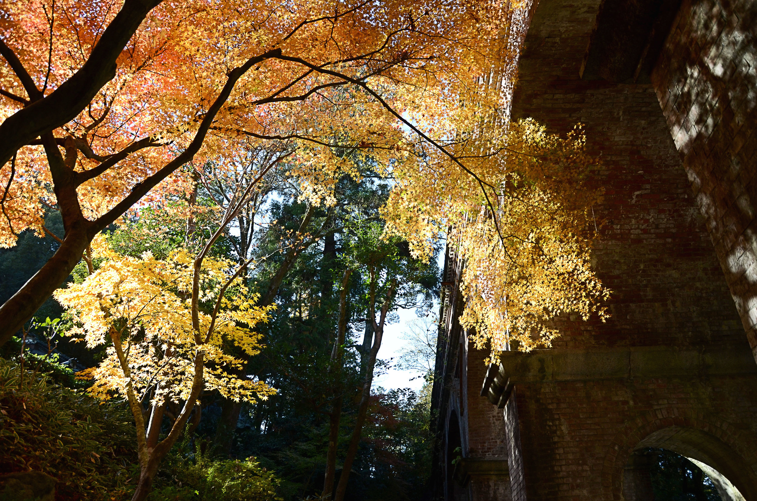 Fall leaves at Nanzen-ji temple in Kyoto