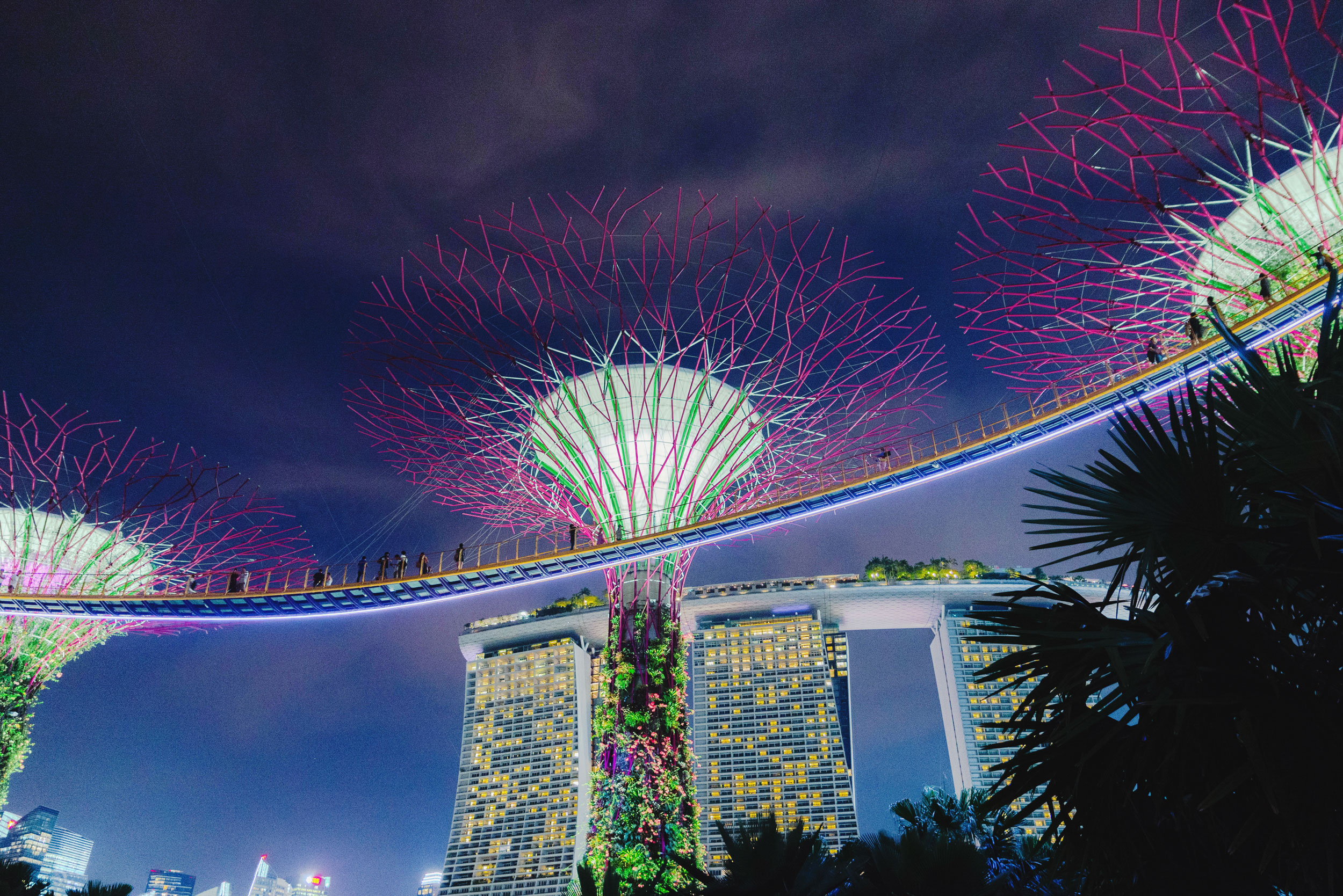 The Supertree Grove at Gardens by the Bay with Marina Bay Sands in the background
