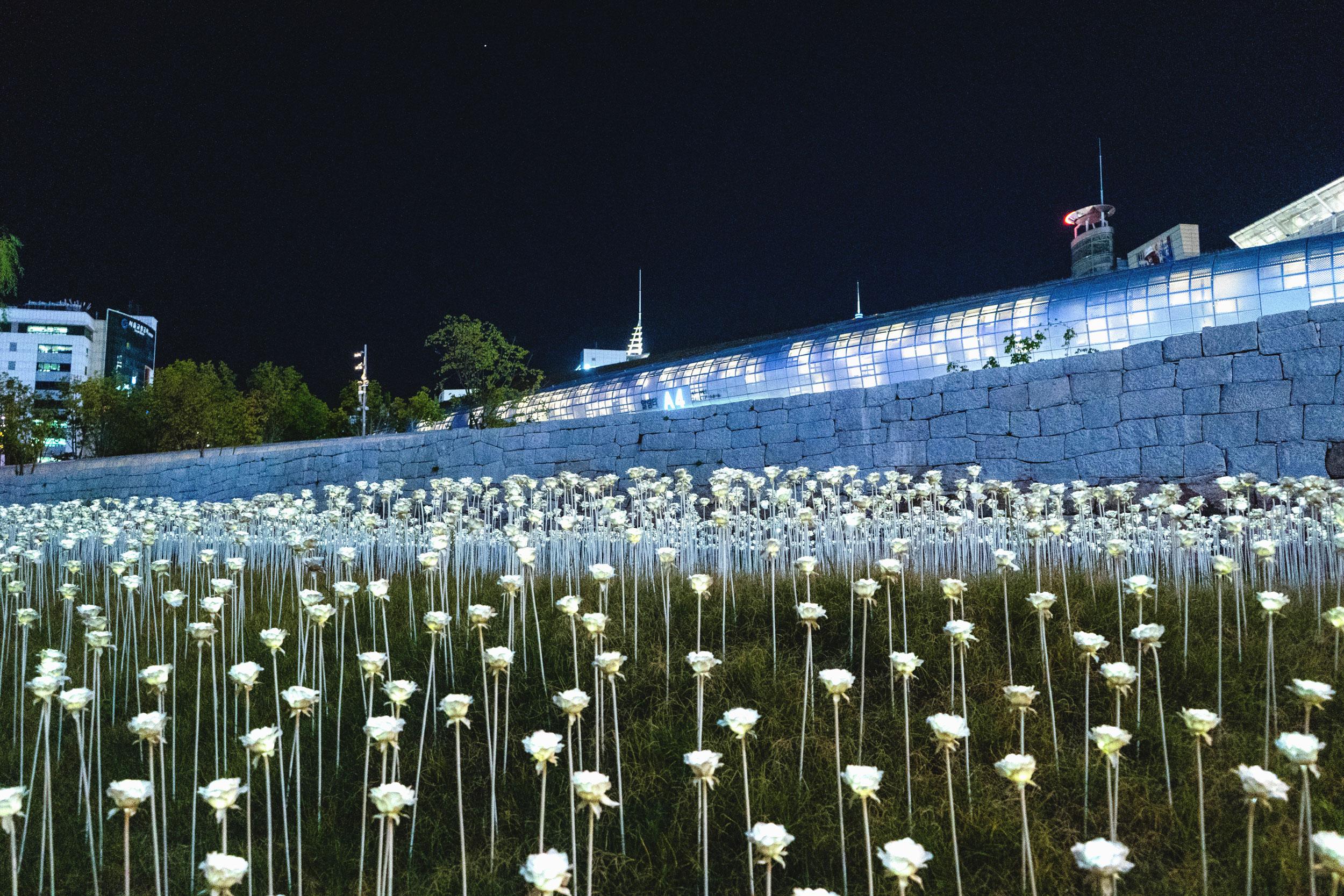 Illuminated rose garden at Dongdaemun Design Plaza (DDP)