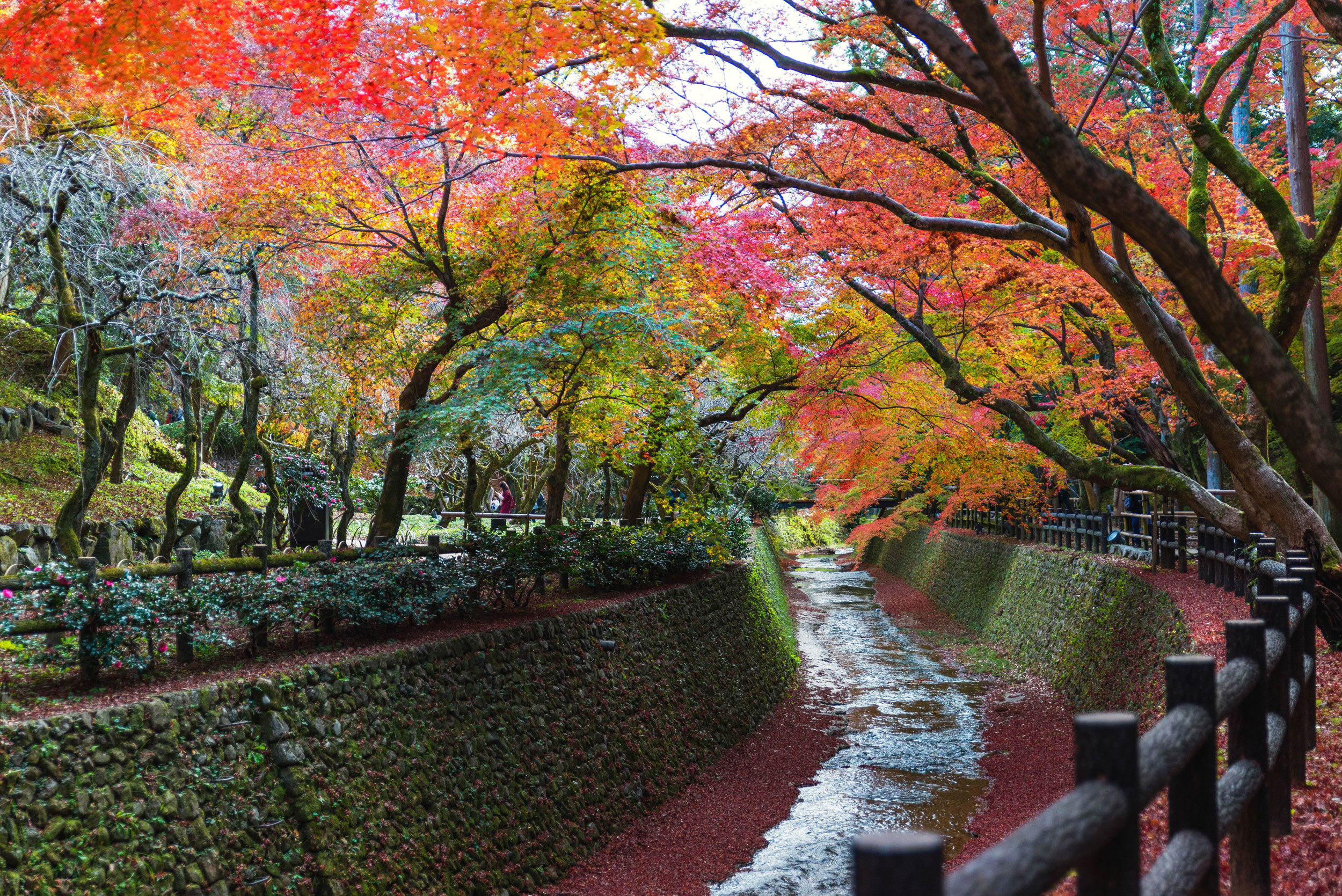 Fall leaves over a canal near Kitano Tenmangu in Kyoto