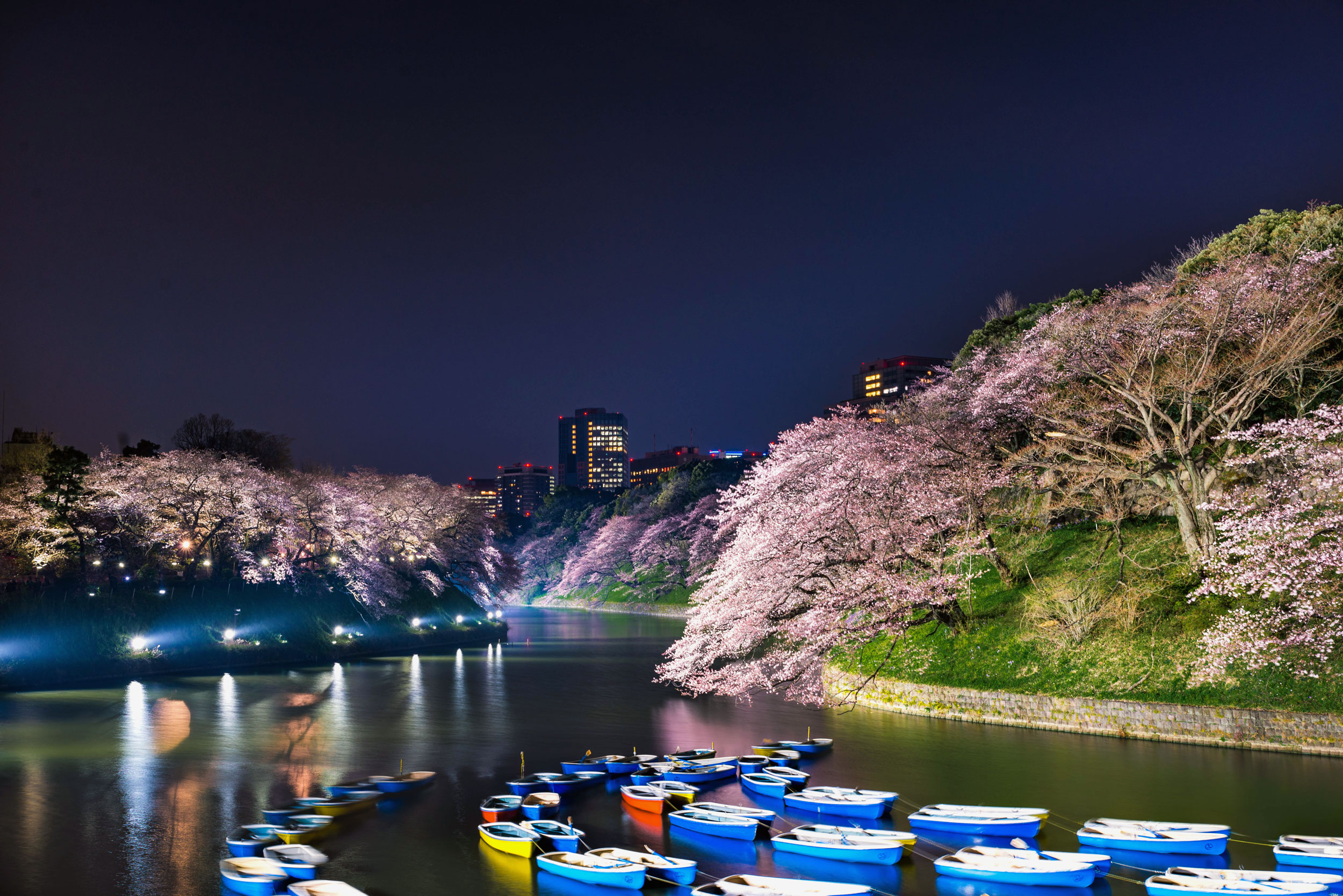 A night scene of cherry blossoms lining the moat at Chidorigafuchi