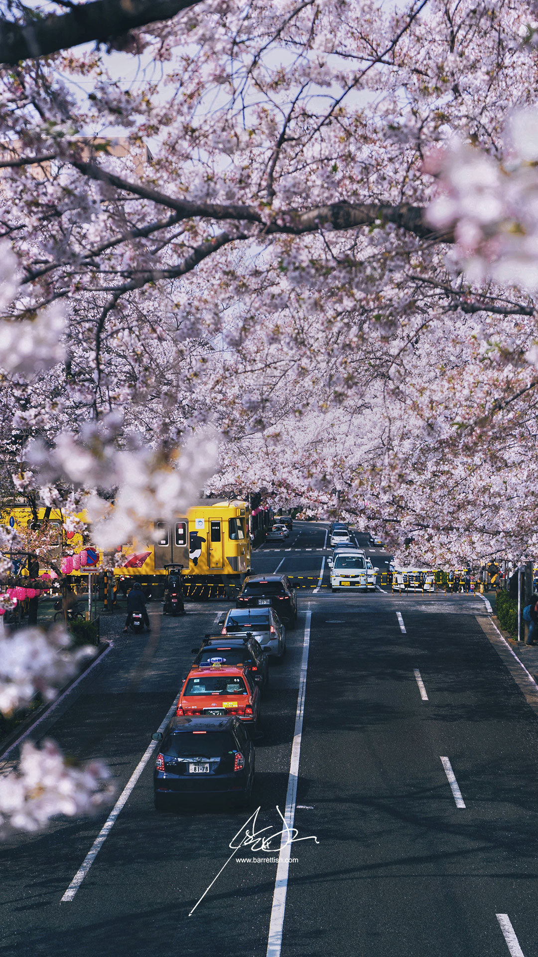 A train passes under cherry blossoms in Nakano, Tokyo   DOWNLOAD
