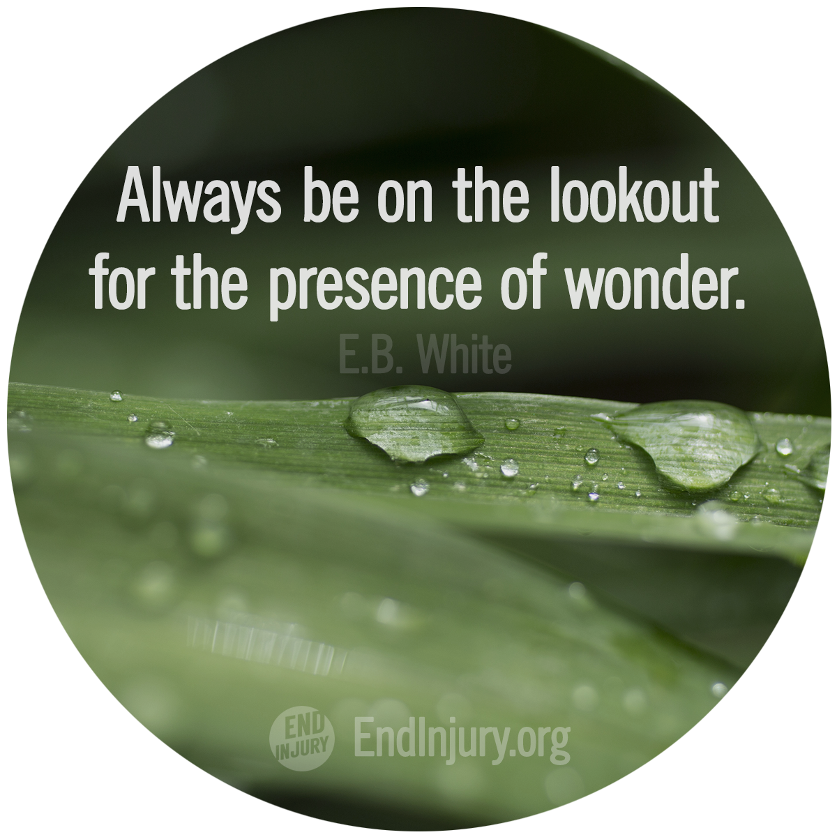 lookout-presence-wonder-white-photo.png