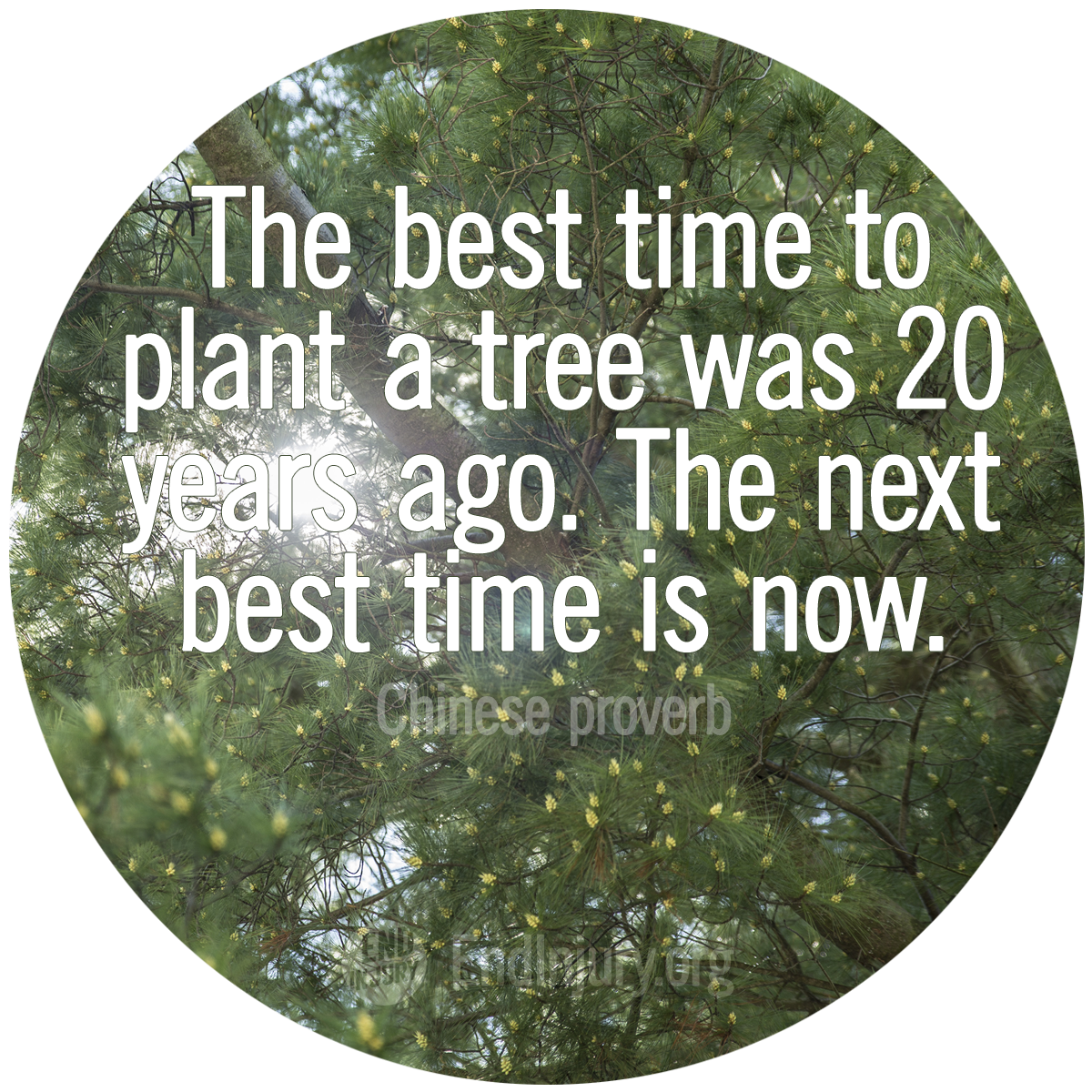 plant-tree-proverb-quote-photo.png