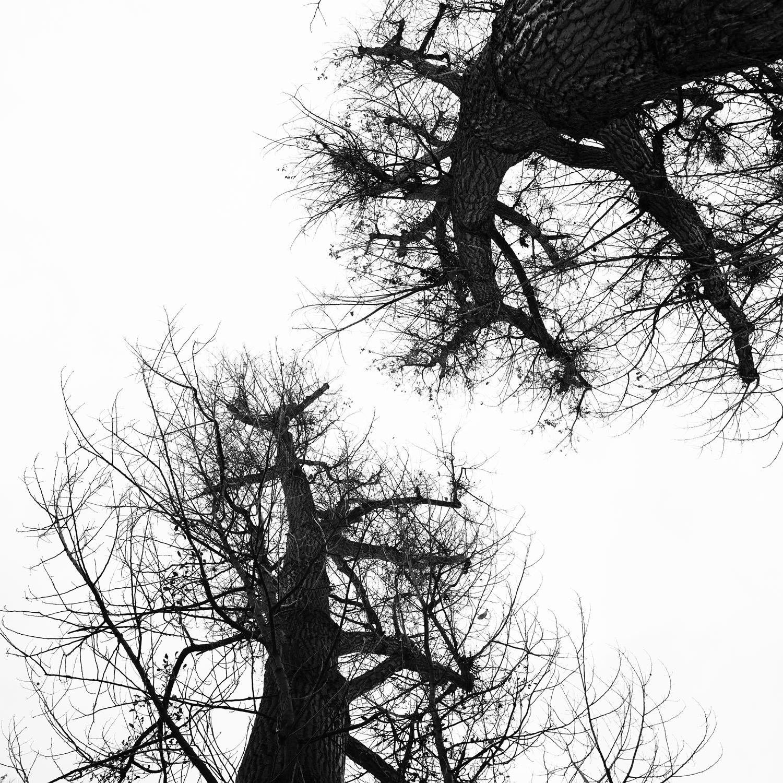 BrunosBäume.png