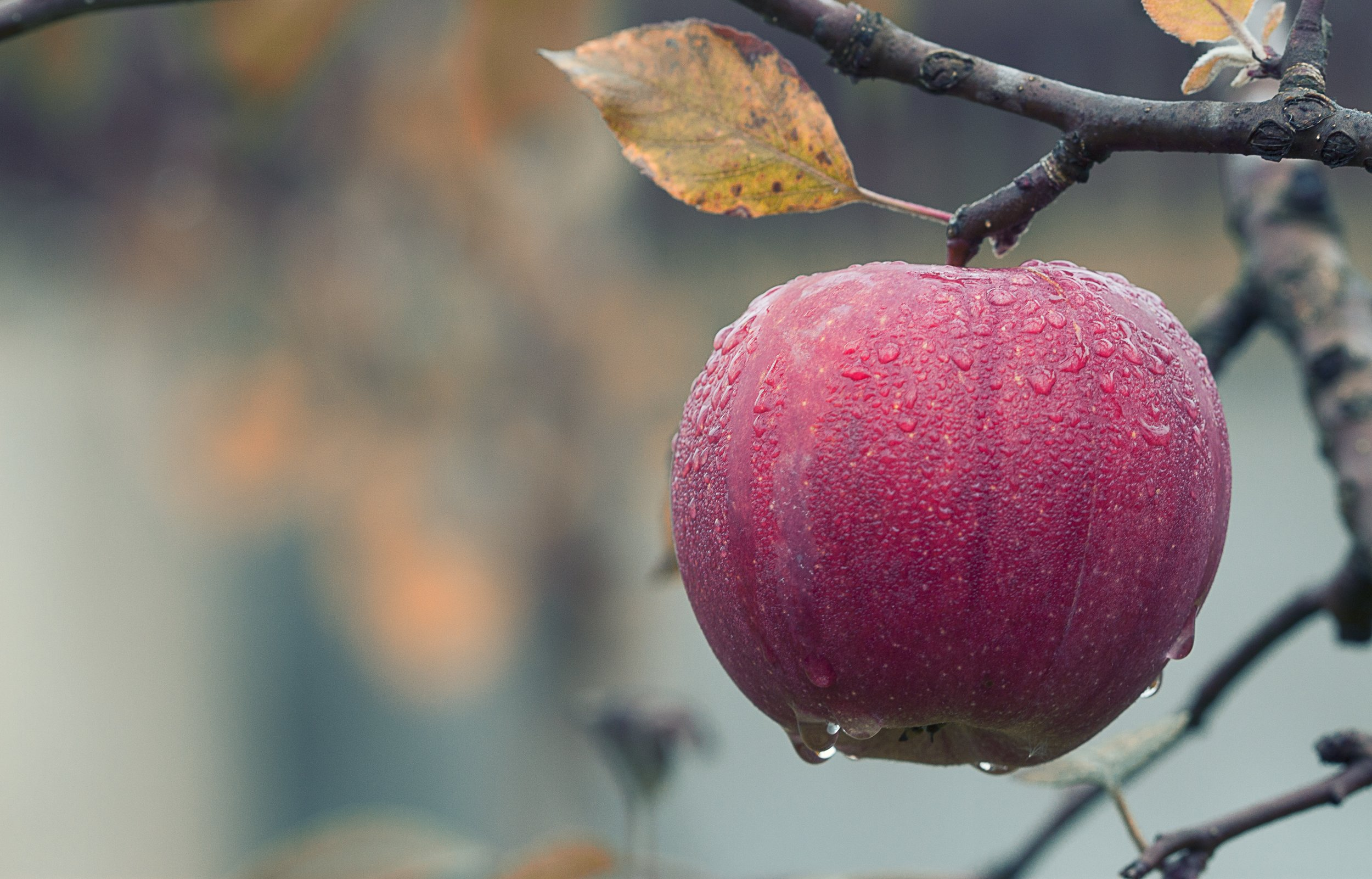 apple-1122537.jpg